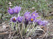 Schoonheid van de de lentezomer royalty-vrije stock foto