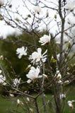 Schoonheid van de magnolia! prachtige dag stock afbeelding