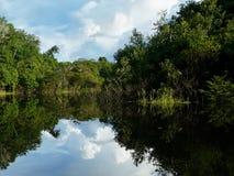 Schoonheid van de rivier van Amazonië stock afbeeldingen