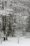Schoonheid van de winter Stock Fotografie