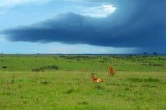 Schoonheid van het landschap van Afrika Stock Afbeeldingen