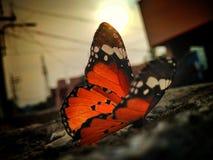 Schoonheid van het Leven stock fotografie