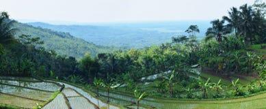 Schoonheid van landschaps ricefield landschap Stock Foto's