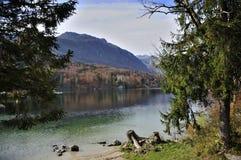 Schoonheid van Meer Bohinj in Slovenië Royalty-vrije Stock Fotografie