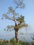 schoonheid van nature& x28; een mooie boom Royalty-vrije Stock Afbeeldingen