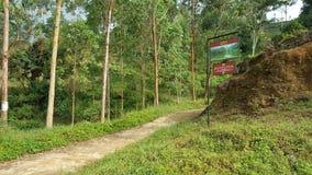 Schoonheid van omhooggaand land in Sri Lanka Royalty-vrije Stock Foto's