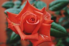 Schoonheid van verse bloem van het aard de groene blad royalty-vrije stock foto's