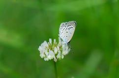 Schoonheid van vlinder Royalty-vrije Stock Afbeelding