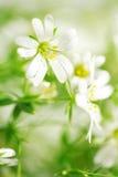 Schoonheid van wilde bloemen Stock Foto's