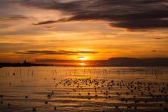 Schoonheid van zonsondergang met wolkenhemel en zeemeeuwen over het overzees Royalty-vrije Stock Afbeelding
