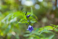 Schoonheid wildflower het bloeien macro, kleurengebied Kleurrijke botanisch royalty-vrije stock foto