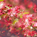 Schoonheids abstracte bloemenachtergronden Royalty-vrije Stock Afbeelding