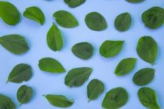 Schoonheidsachtergrond met bladeren op pastelkleurblauw De hoogste vlakke mening, legt stock foto