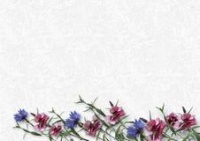 Schoonheidsbloemen op witte achtergrond groetkaart met kuuroord Stock Afbeelding
