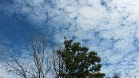 Schoonheidsboom en bewolkte hemel royalty-vrije stock fotografie