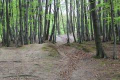 Schoonheidsbossen Stock Fotografie