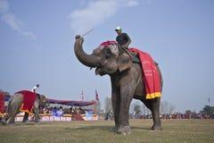 Schoonheidswedstrijd - Olifantsfestival, Chitwan 2013, Nepal Royalty-vrije Stock Afbeeldingen