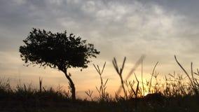 Schoonheidszonsopkomst in de vroege ochtend in Maleisië Een boom met het gouden licht stock video