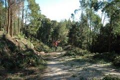 Schoonmakend Forest Machine Grinding Wood - Milieu Stock Afbeelding