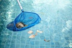 Schoonmakend zwembad van gevallen bladeren met blauwe netto schuimspaan stock foto's
