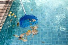 Schoonmakend zwembad van gevallen bladeren met blauwe schuimspaan stock foto's
