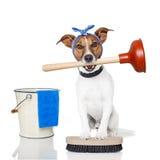 Schoonmakende hond stock foto's