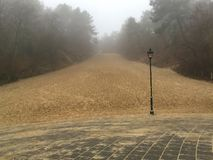 Schoorl piaska diuna na mgłowym dniu Obraz Royalty Free