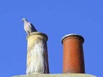 Schoorsteenpotten met houten duif Stock Fotografie