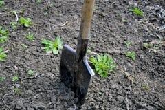Schop in de grond in het tuingebied dat wordt geplakt royalty-vrije stock foto's