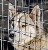 Schor hond in een kooi stock foto