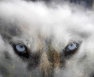 Schor hond het bos stock fotografie