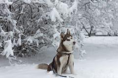 Schor hondzitting in het sneeuwpark stock foto