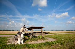 Schor puppy met lijst Stock Afbeelding