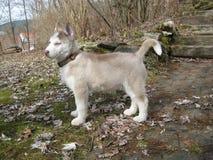 Schor Puppy in Tuin Royalty-vrije Stock Afbeeldingen