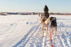 Schor sleerit bij zonsondergang in de winterlandschap Royalty-vrije Stock Fotografie