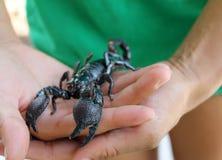 Schorpioen en handen Stock Afbeeldingen
