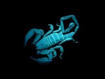 Schorpioen onder blacklight Stock Foto