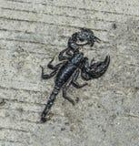 Schorpioen op de weg Stock Afbeeldingen
