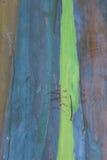 Schors 2 van de eucalyptus stock foto