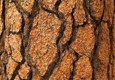 Schors: Close-up Stock Foto