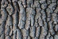 Schors eiken structuur op een heldere dag Stock Foto