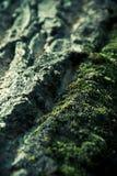 Schors en mos Stock Foto's