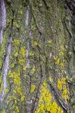 Schors en mos Royalty-vrije Stock Afbeeldingen