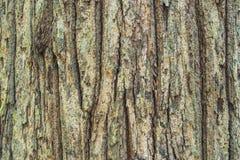 Schors houten textuur Stock Afbeeldingen