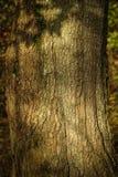 Schors op een boom op een zonnige dag Royalty-vrije Stock Afbeelding