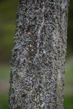 Schors op een boom op een zonnige dag Royalty-vrije Stock Fotografie