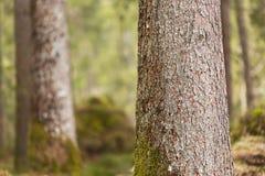 Schors van bomen met mos, Berchtesgaden, Duitsland Stock Foto's