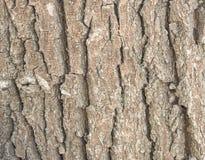 Schors van boom Stock Foto