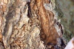 Schors van boom Stock Foto's