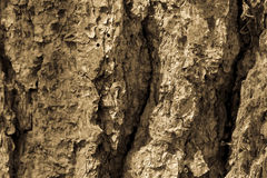 Schors van boom Bruine Textuur Stock Foto
